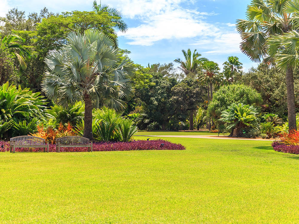 Coral Springs Landscaping