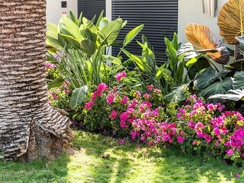 Coral Springs Garden Design